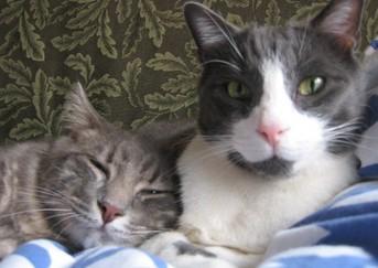 Kitties_close