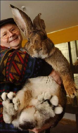 Big_bunny