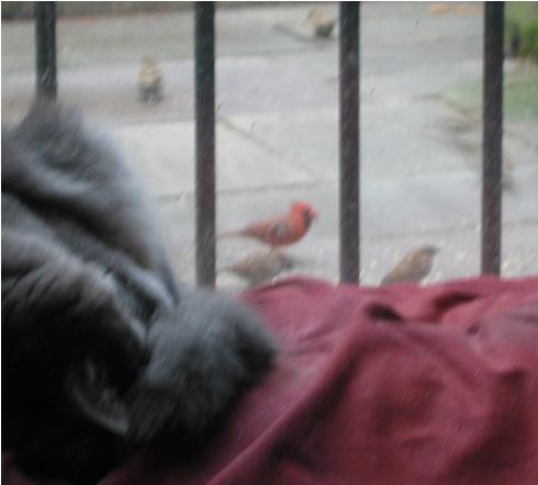 Kuba_birds